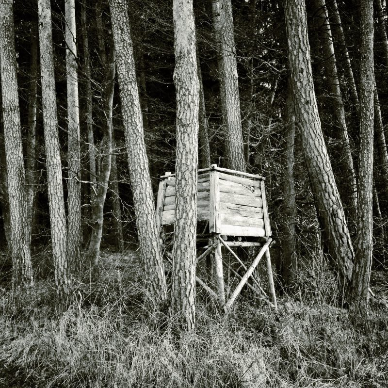 Herzenssache - Am Waldrand