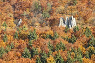Der Titel - Herbstwald und Rifflerfelsen bei Alfalter im Pegnitztal