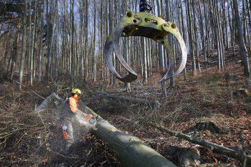 Der Januar - Holzeinschlag an der Strasse von Hohenstadt nach Kleinviehberg