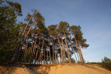 Der Mai - Naturwaldreservat Grenzweg, Bayerische Staatsforsten, Naturschutzgebiet Flechten-Kiefernwaelder südlich von Leinburg