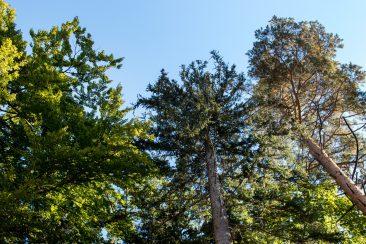 Der Juli - Buche, Fichte, Kiefer, die drei häufigsten Baumarten im Nürnberger Land hier auf der Mühlkoppe bei Pommelsbrunn, am Rande einer Blockschutthalde,