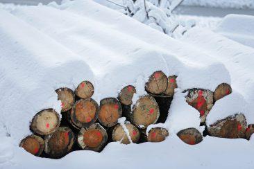 Der Dezember - Abfuhrbereites Stammholz im Schnee auf dem Deckersberg bei Hersbruck