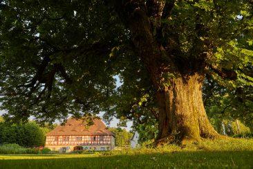 Rücktitel - Das Grüne Zentrum im Schlosspark Henfenfeld, Sitz der Forstbetriebsgemeinschaft Nürnberger Land, des Maschinenrings Nürnberger Land und des Naturschutzzentrums Wengleinpark