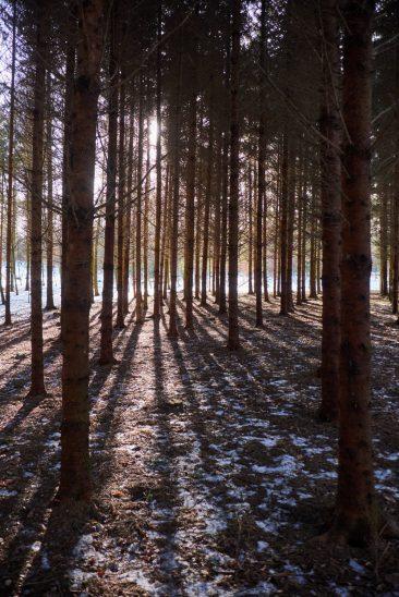 Im Wald zwischen Prosberg, Breitenbrunn und Vorderhaslach