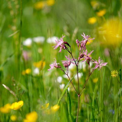 Artenreiche Wiese - Streuobstinitiative Hersbruck, Obstsortengarten