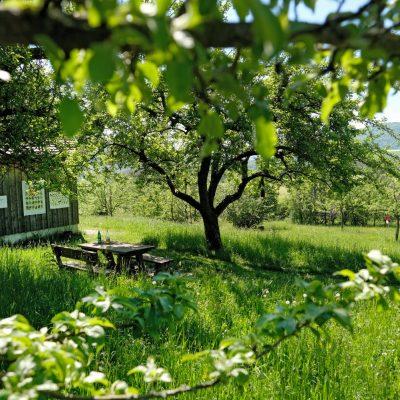 Streuobstinitiative Hersbruck, Obstsortengarten