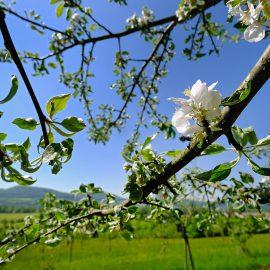 POM 200 – die neue Hersbrucker Bio-Apfelsaftschorle