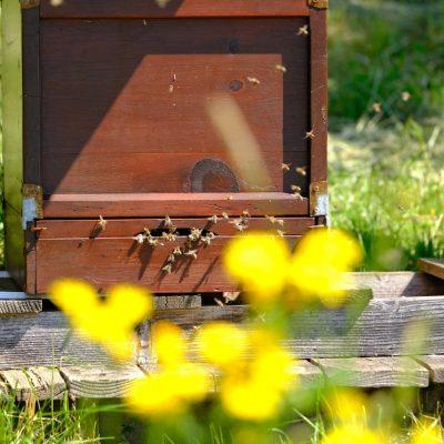 Die Bienen müssen hier nicht weit fliegen - Streuobstinitiative Hersbruck, Obstsortengarten