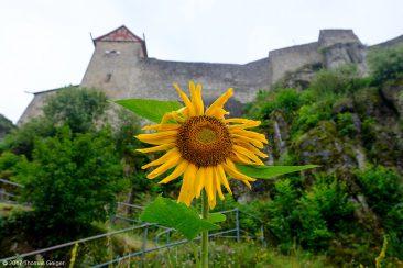 Burg Hohenstein mit Sonnenblume