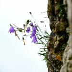 Blumen auf dem Burgfelsen im Regen