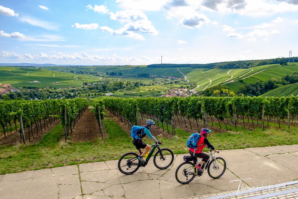 Zwei Radfahrer auf einem Beton Radweg, im Hintergrund Weinberge und ein Blick ins Maintal