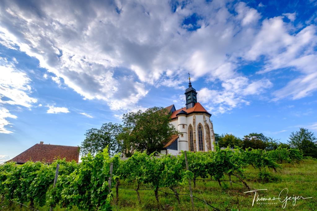 Kirche hinter Weinstöcken mit weißen Wolken am blauen Himmel