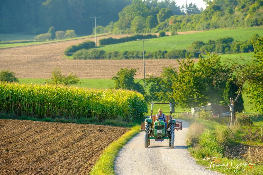 Ein Bauer auf einem Traktor fährt einen Feldweg entlang, im Hintergrund Obstbäume und Maisfeld