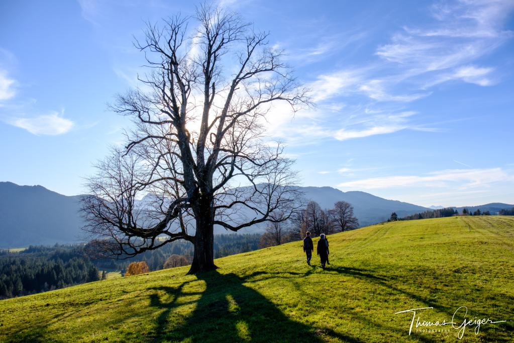 Großer alter Baum ohne Blätter im Gegenlicht auf einer Bergwiese, daneben Wanderer, im Hintergrund Bergpanorama.