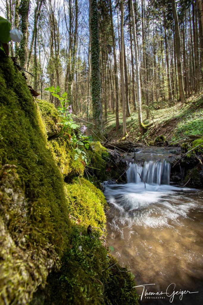 Ein kleiner Bach fliesst durch einen Wald