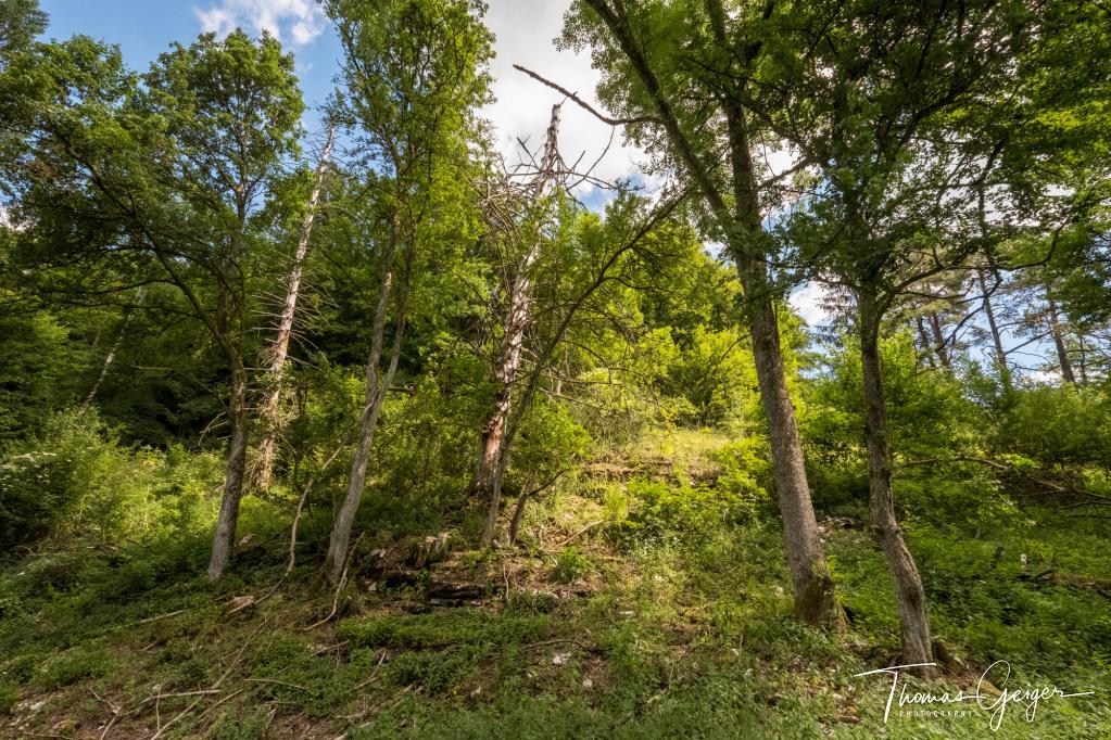 Verschiedene Bäume an einem Hang