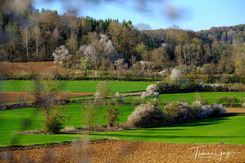 Blühende Hecken in einer kleingliedrigen Landschaft auf der Fränkischen Alb